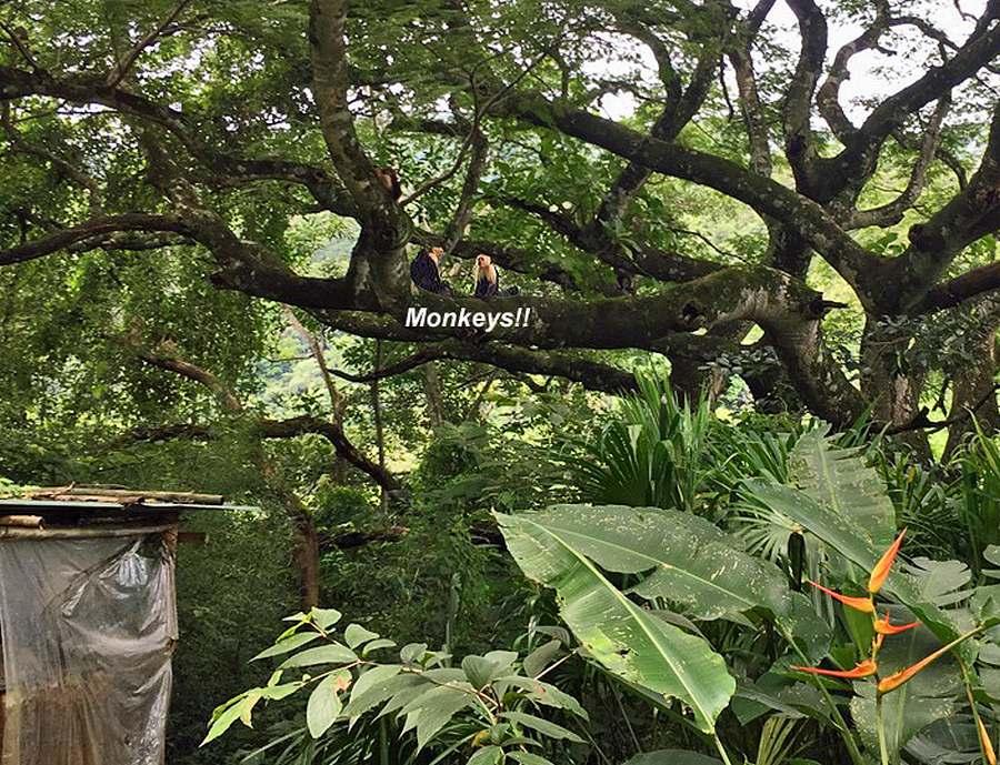 Ciudad Colon, Private Nature Reserve-Retreat for Sale, 4 Houses, 36 Acres, MONKEYS
