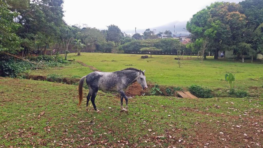 Nearly 2-Acre Property with House for Sale in Bajo Rodriguez center